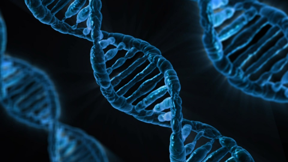 DNA Gene